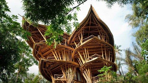 Бамбук встроительстве иотделке