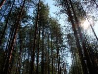 договор-субаренды-лесного-участка