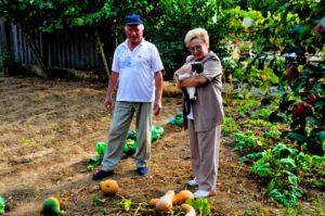 Налог на садовый участок для пенсионеров в 2017 году