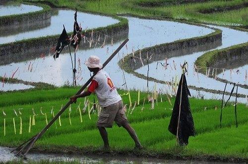 Работа в Индонезии