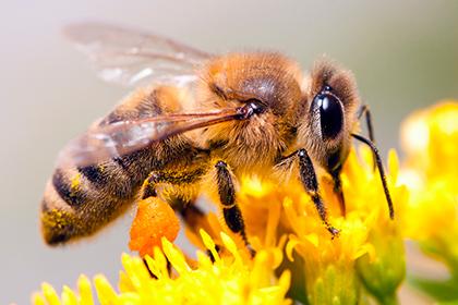Спор из-за пчел